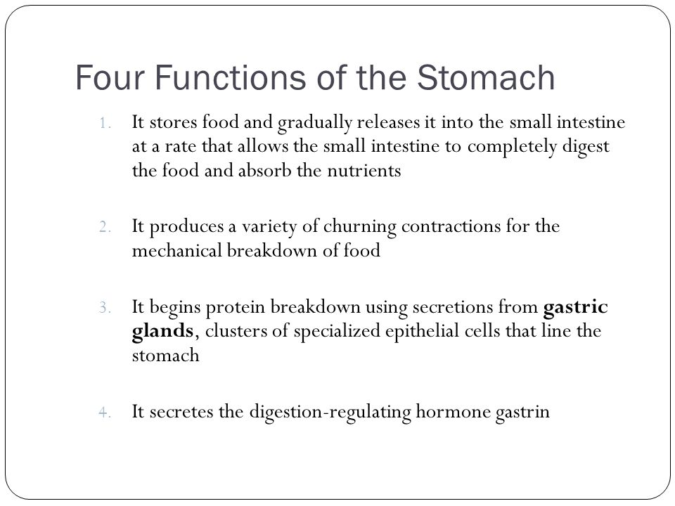 Four Functions of the Stomach