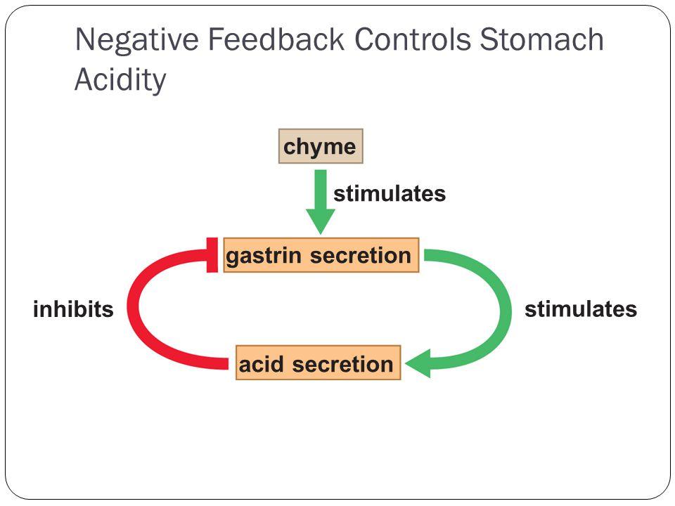Negative Feedback Controls Stomach Acidity