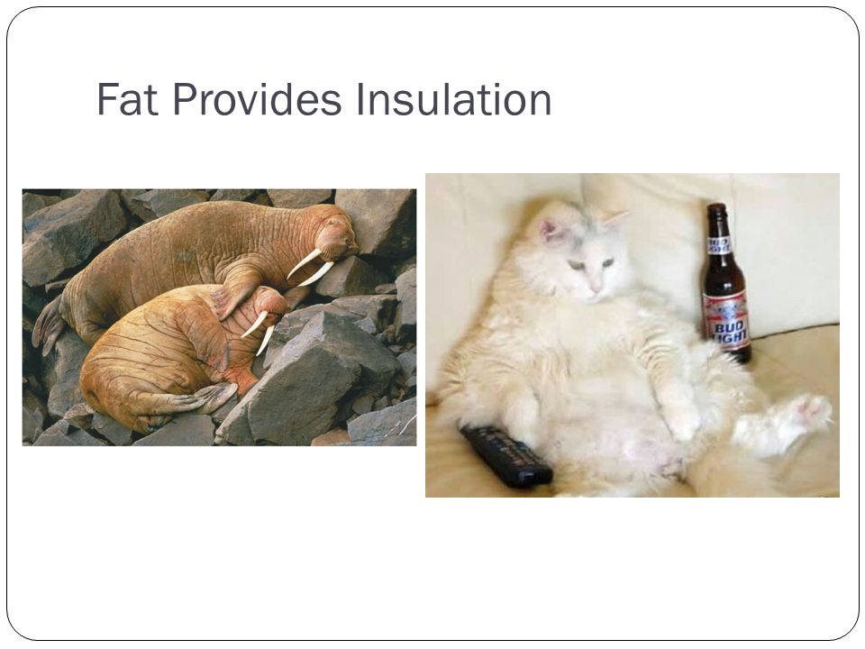 Fat Provides Insulation
