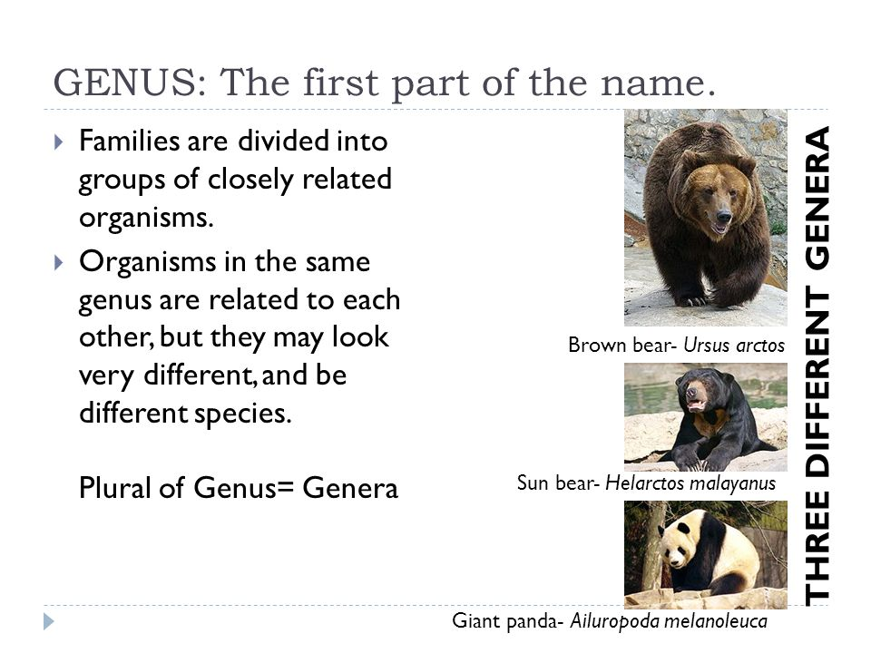GENUS: The first part of the name.