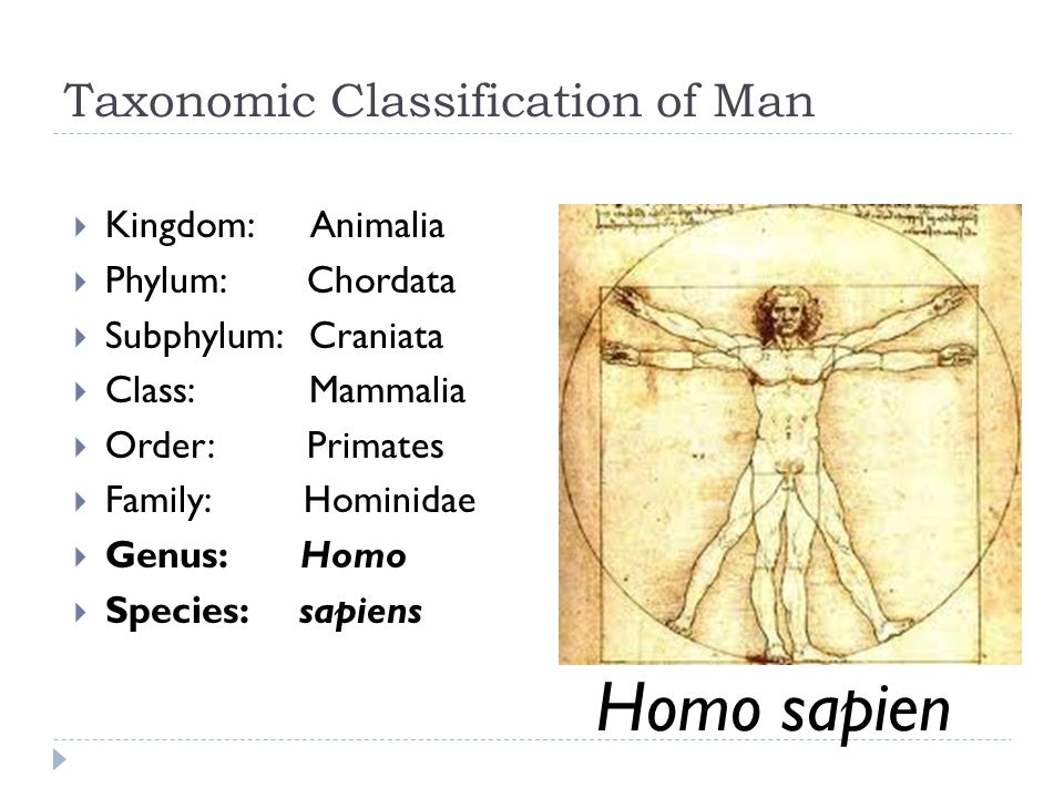 Taxonomic Classification of Man