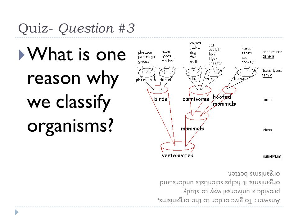 What is one reason why we classify organisms