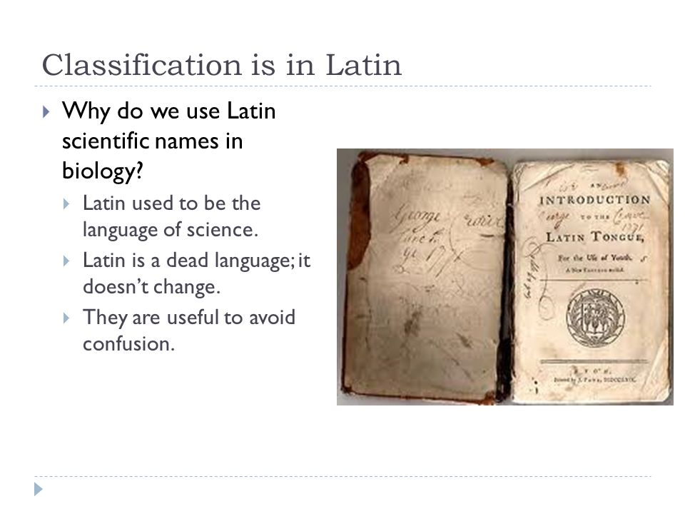 Classification is in Latin