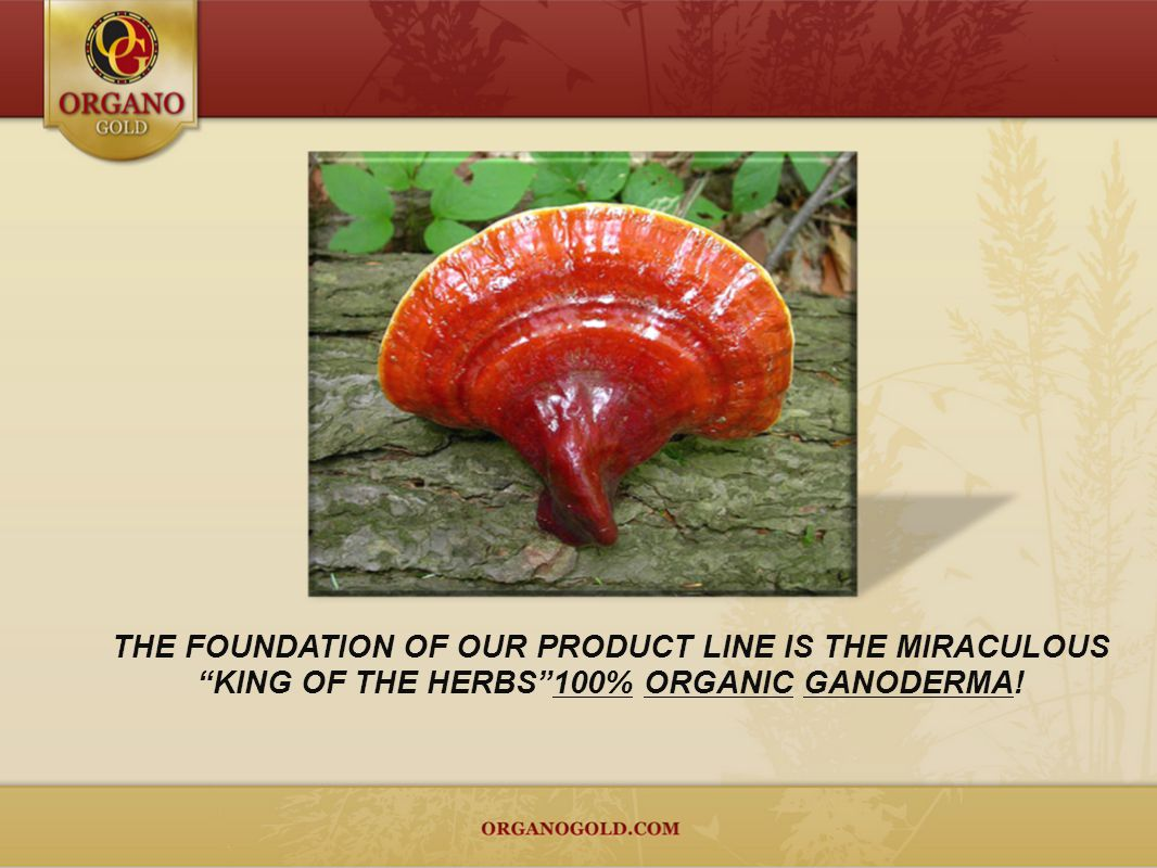THE FOUNDATION OF OUR PRODUCT LINE IS THE MIRACULOUS