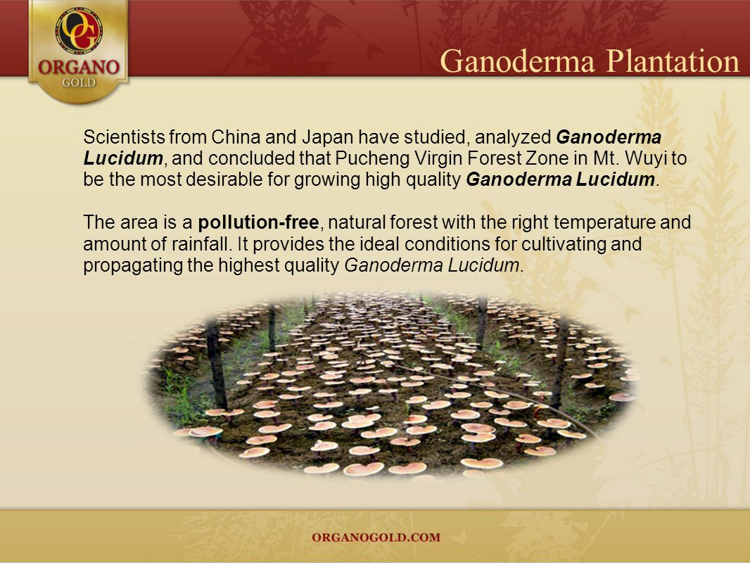 Ganoderma Plantation