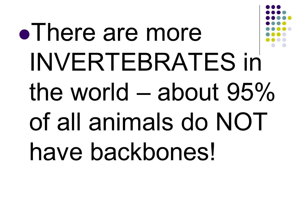 There are more INVERTEBRATES in the world – about 95% of all animals do NOT have backbones!