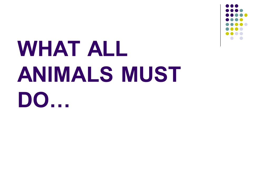 WHAT ALL ANIMALS MUST DO…