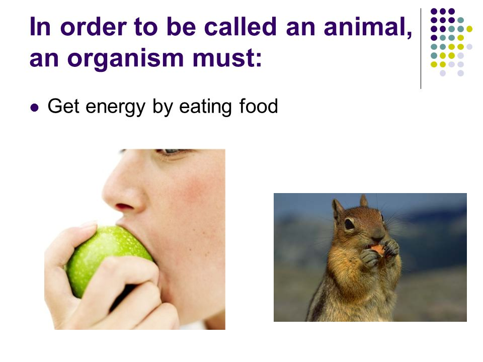 In order to be called an animal, an organism must: