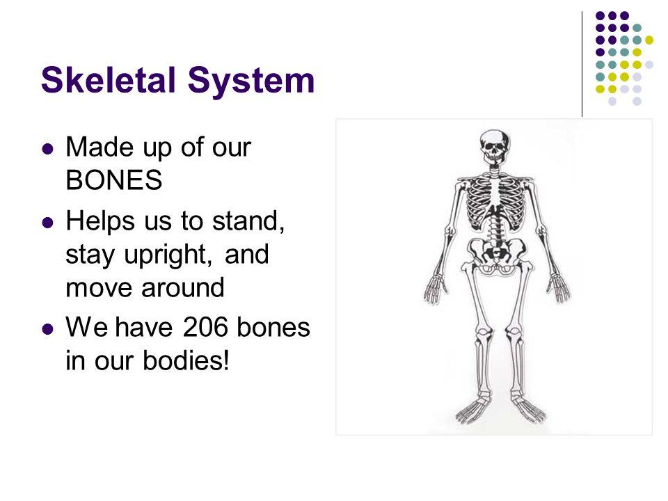 Skeletal System Made up of our BONES