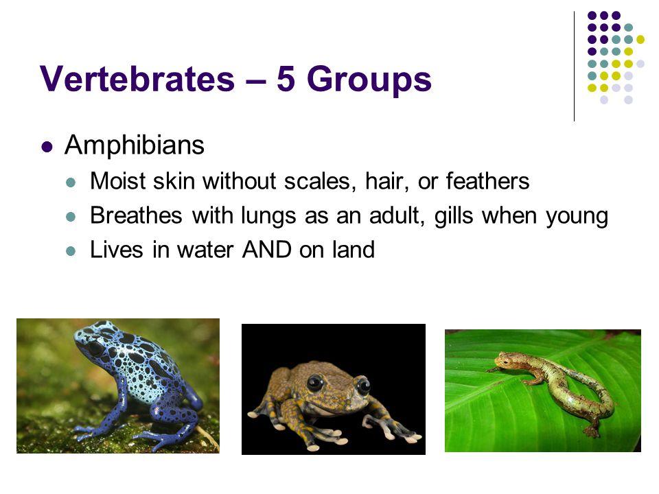 Vertebrates – 5 Groups Amphibians