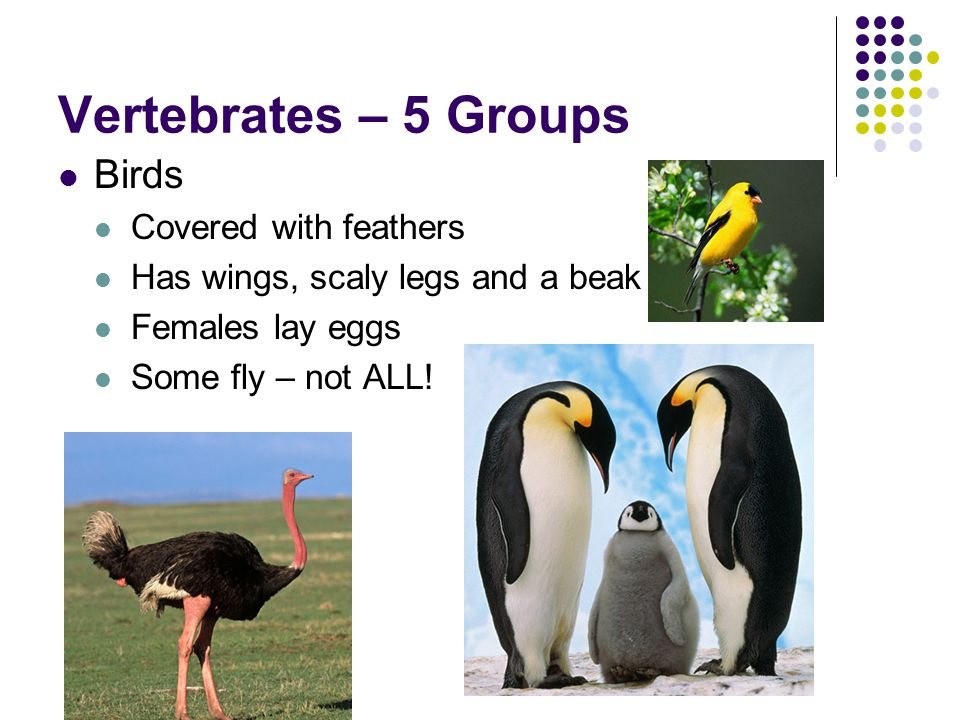 Vertebrates – 5 Groups Birds Covered with feathers