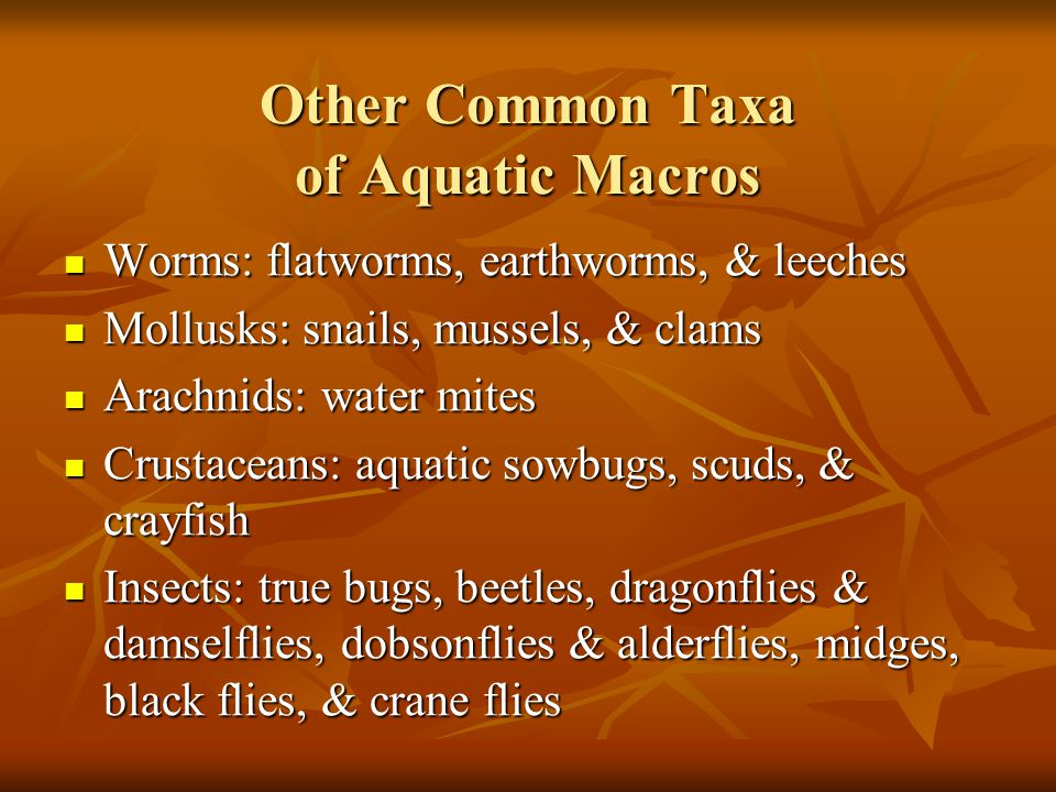 Other Common Taxa of Aquatic Macros