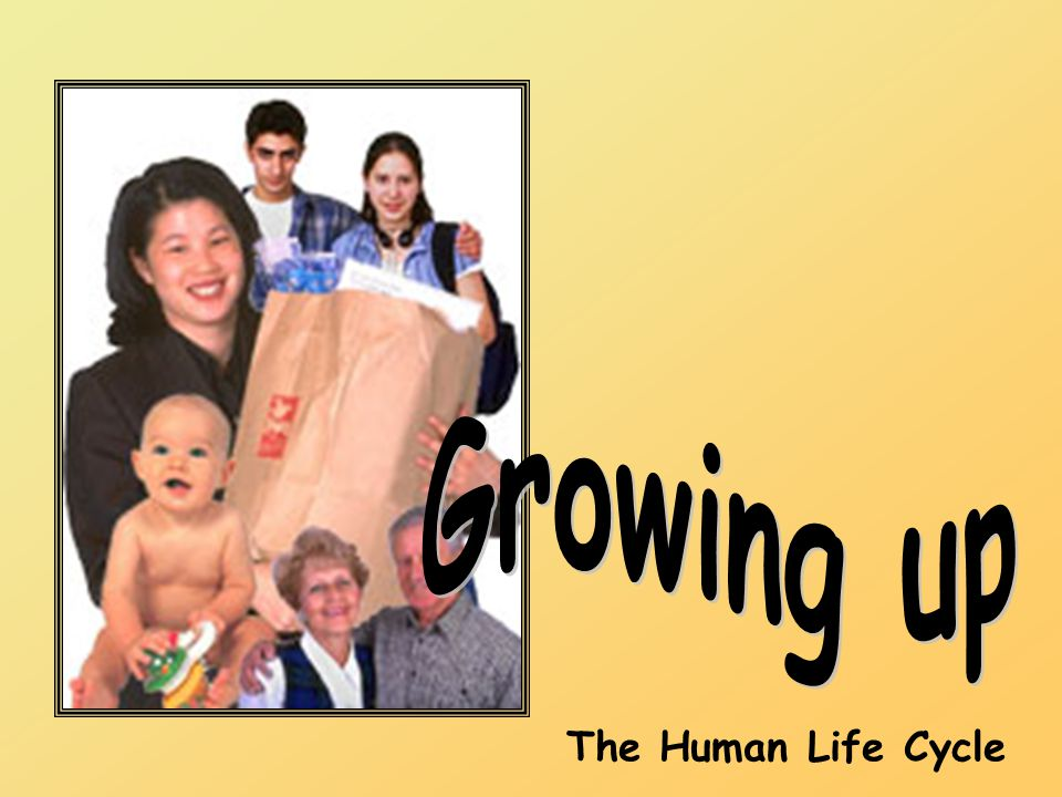 Growing up The Human Life Cycle