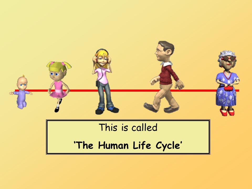 This is called 'The Human Life Cycle'
