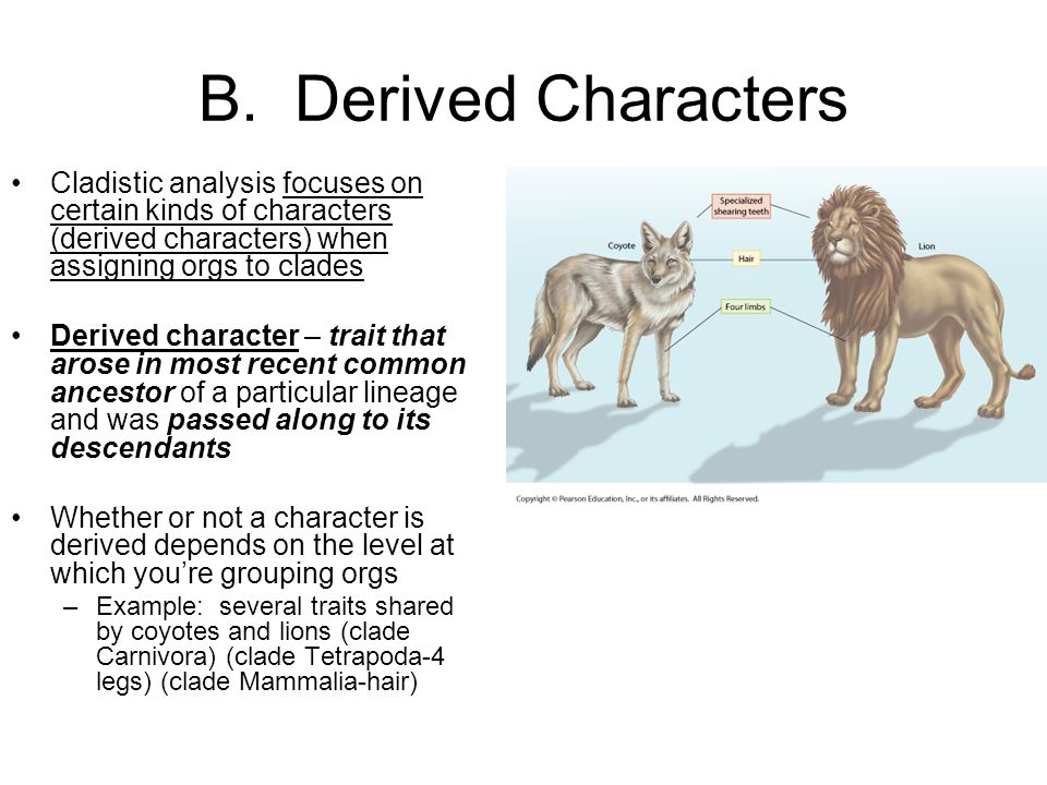 B. Derived Characters Cladistic analysis focuses on certain kinds of characters (derived characters) when assigning orgs to clades.