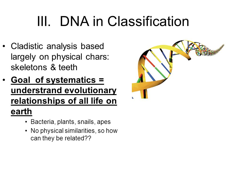 III. DNA in Classification