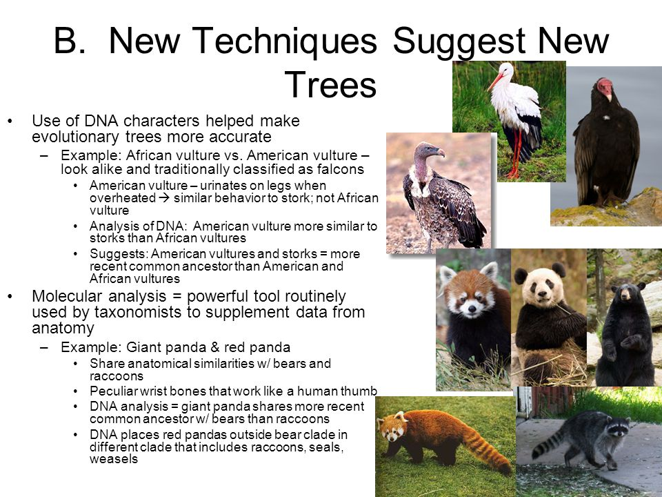 B. New Techniques Suggest New Trees