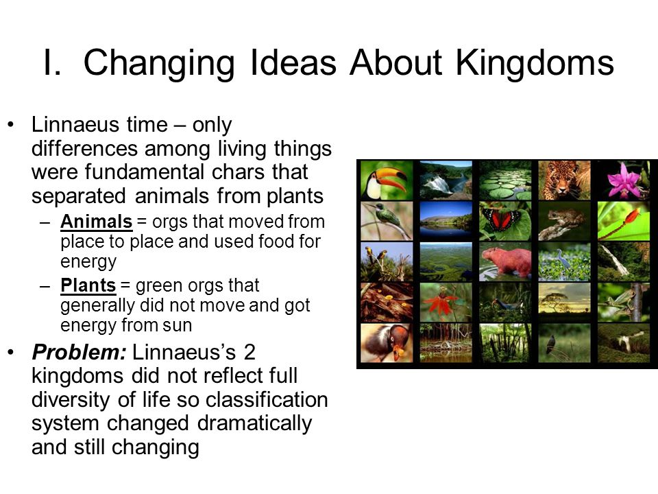 I. Changing Ideas About Kingdoms