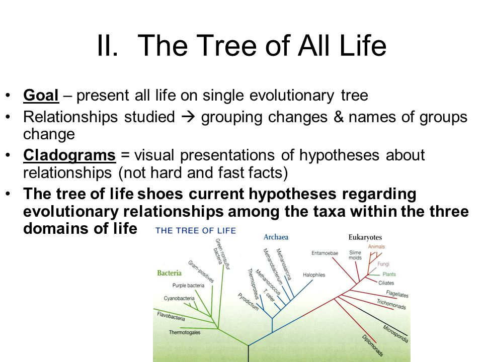 II. The Tree of All Life Goal – present all life on single evolutionary tree. Relationships studied  grouping changes & names of groups change.