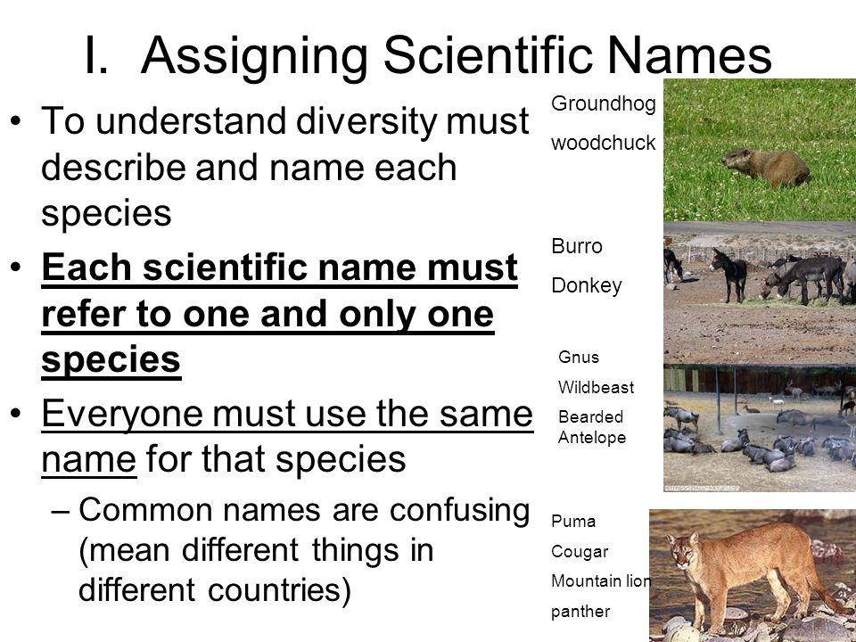 I. Assigning Scientific Names