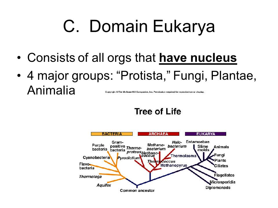 C. Domain Eukarya Consists of all orgs that have nucleus