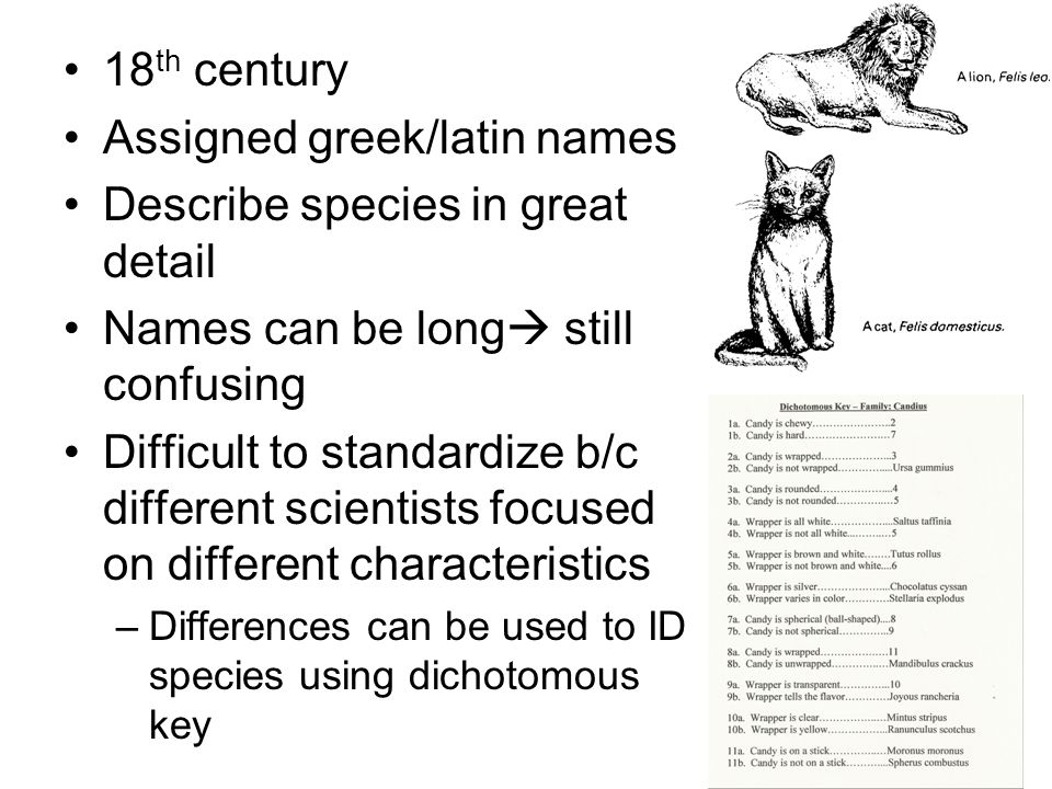 Assigned greek/latin names Describe species in great detail