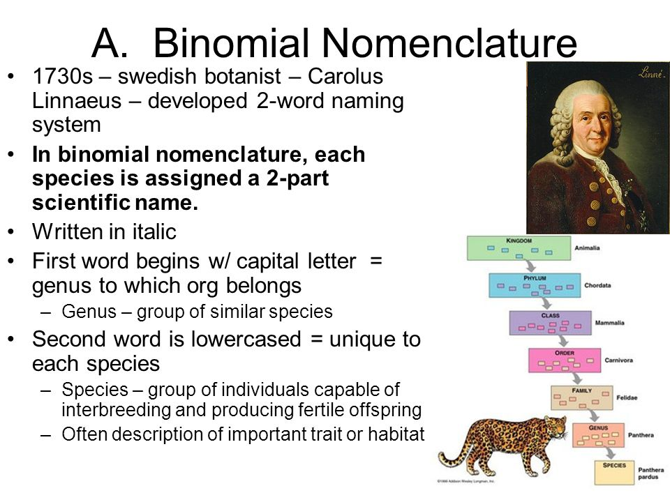 binomial system The binomial system of classification, first deisgned by carl linnaeus, is the two-named system (which is what binomial means) is is the genus and specie of an animal, ie tursiops truncatus.