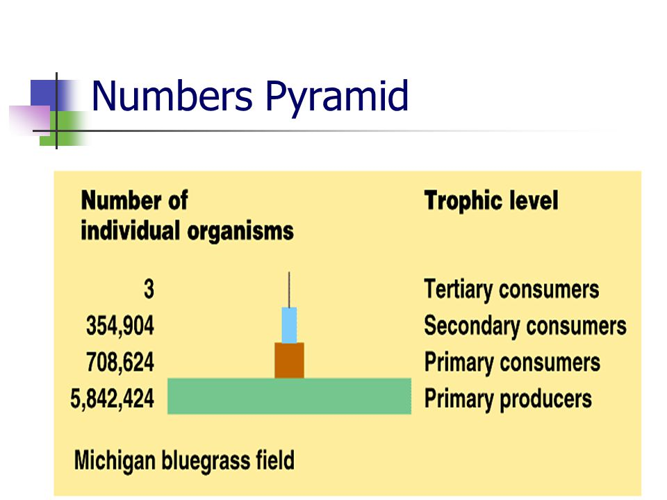 Numbers Pyramid