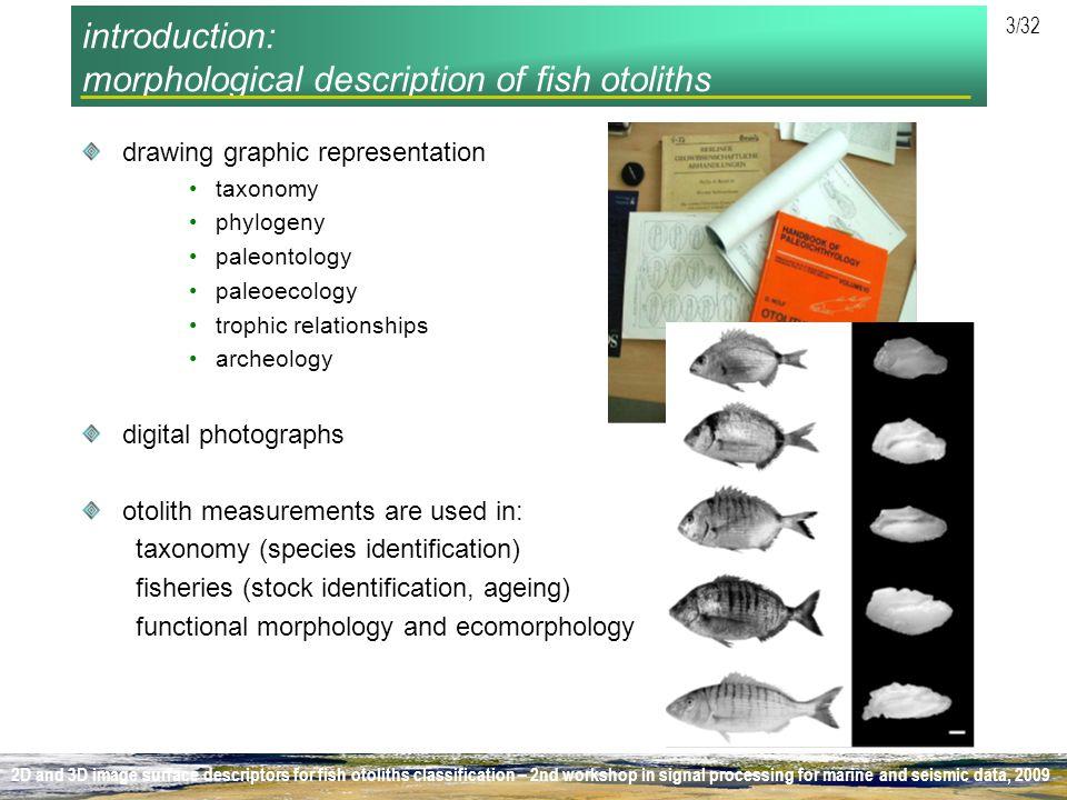 introduction: morphological description of fish otoliths