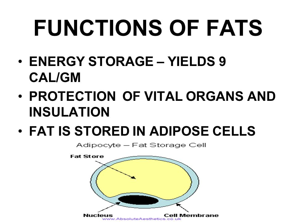 FUNCTIONS OF FATS ENERGY STORAGE – YIELDS 9 CAL/GM