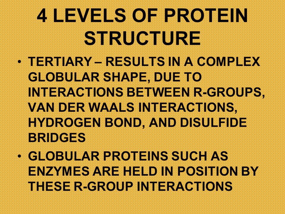 4 LEVELS OF PROTEIN STRUCTURE