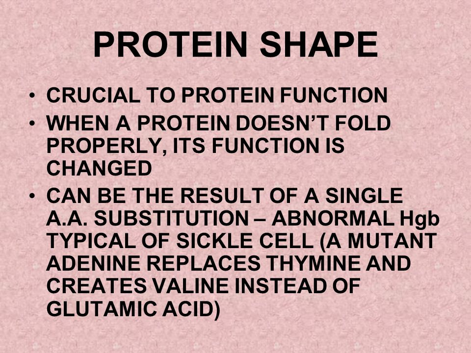 PROTEIN SHAPE CRUCIAL TO PROTEIN FUNCTION
