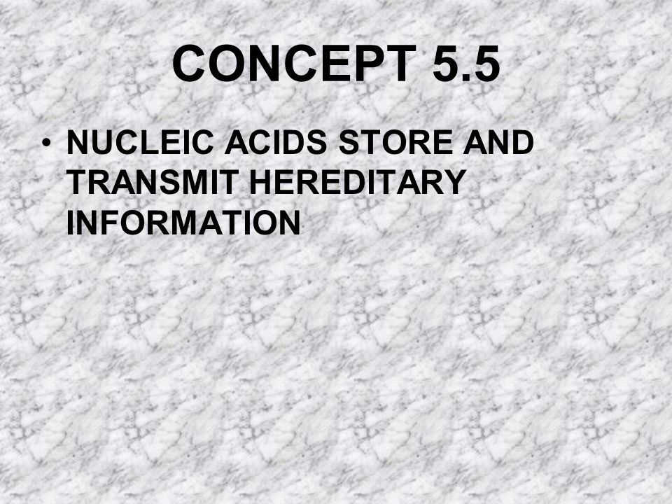 CONCEPT 5.5 NUCLEIC ACIDS STORE AND TRANSMIT HEREDITARY INFORMATION