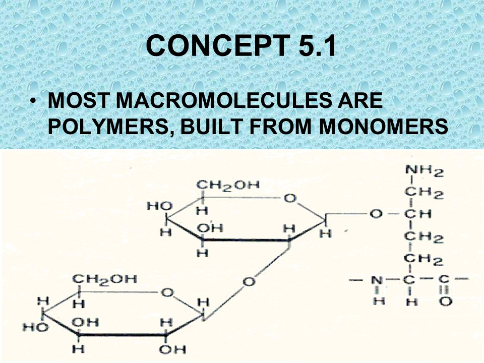CONCEPT 5.1 MOST MACROMOLECULES ARE POLYMERS, BUILT FROM MONOMERS