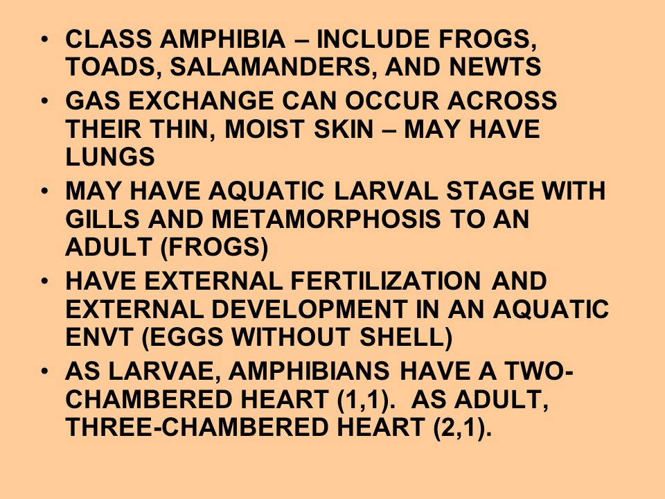 CLASS AMPHIBIA – INCLUDE FROGS, TOADS, SALAMANDERS, AND NEWTS