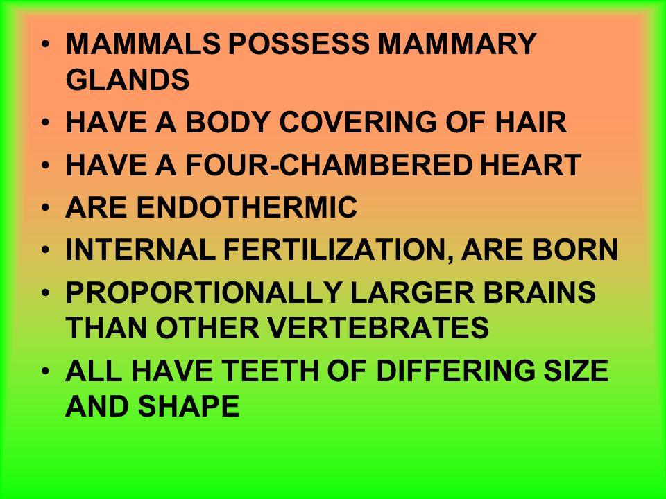 MAMMALS POSSESS MAMMARY GLANDS