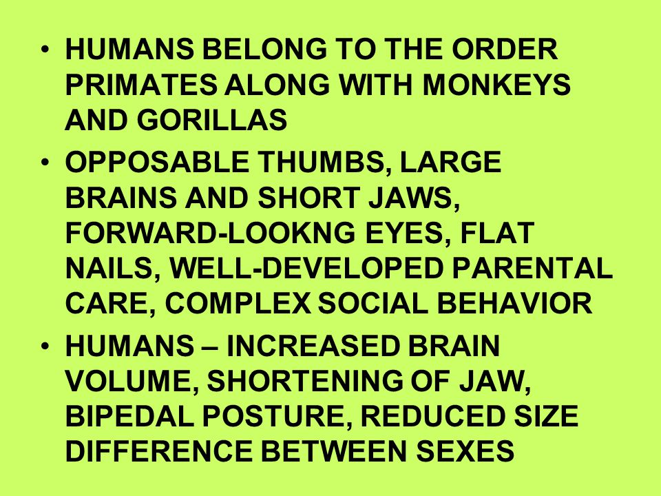 HUMANS BELONG TO THE ORDER PRIMATES ALONG WITH MONKEYS AND GORILLAS