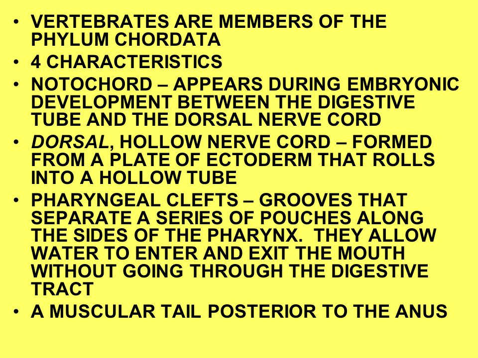 VERTEBRATES ARE MEMBERS OF THE PHYLUM CHORDATA