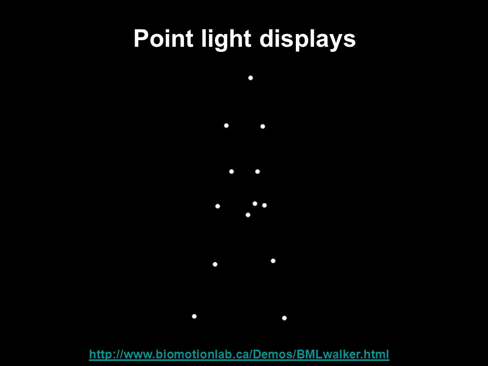 Point light displays Link: http://www.biomotionlab.ca/Demos/BMLwalker.html