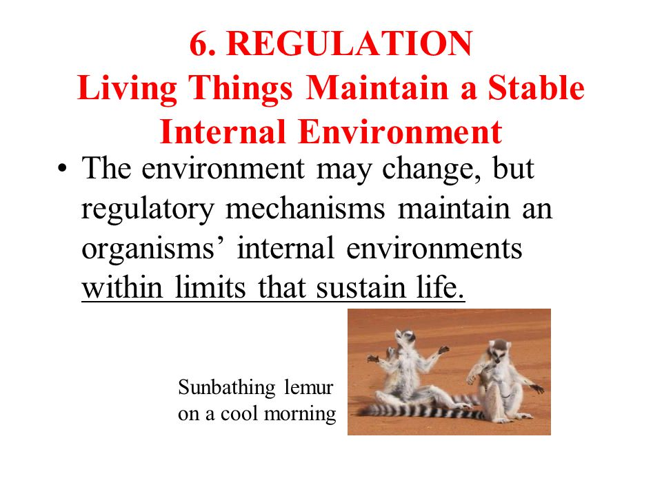 6. REGULATION Living Things Maintain a Stable Internal Environment