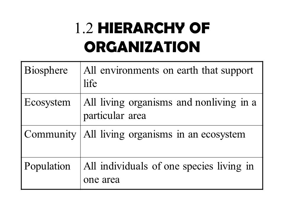 1.2 HIERARCHY OF ORGANIZATION