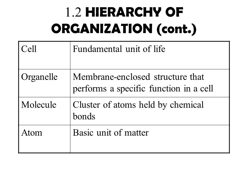 1.2 HIERARCHY OF ORGANIZATION (cont.)