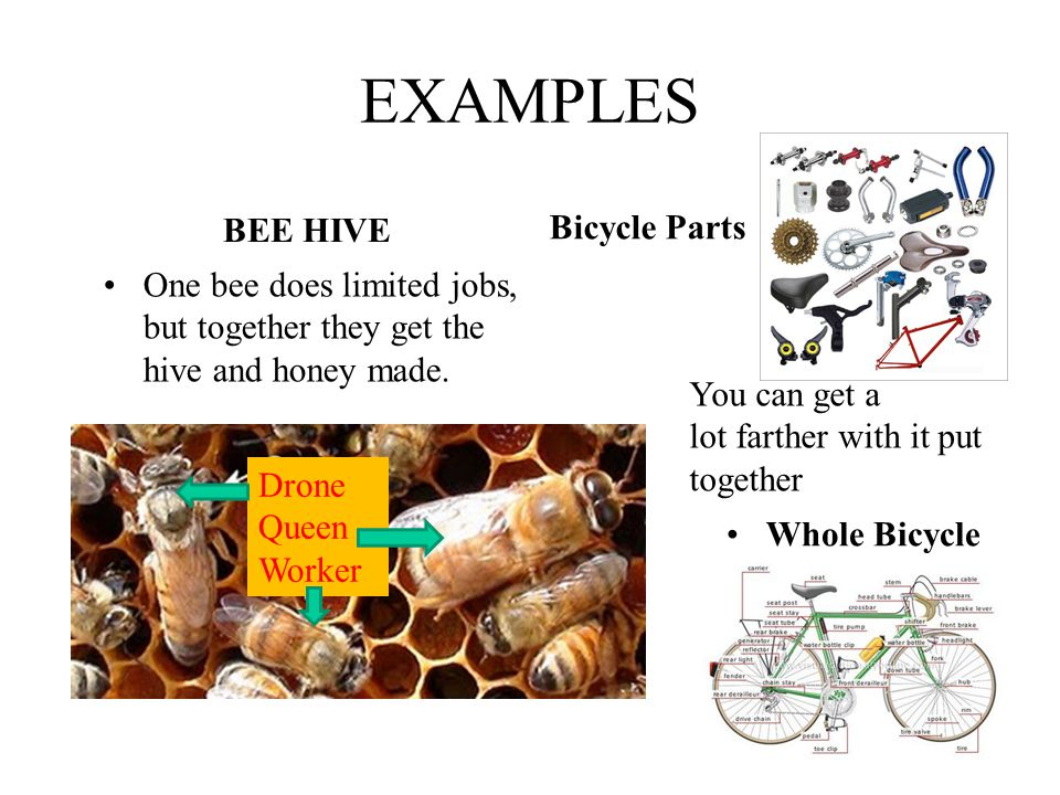 EXAMPLES BEE HIVE Bicycle Parts