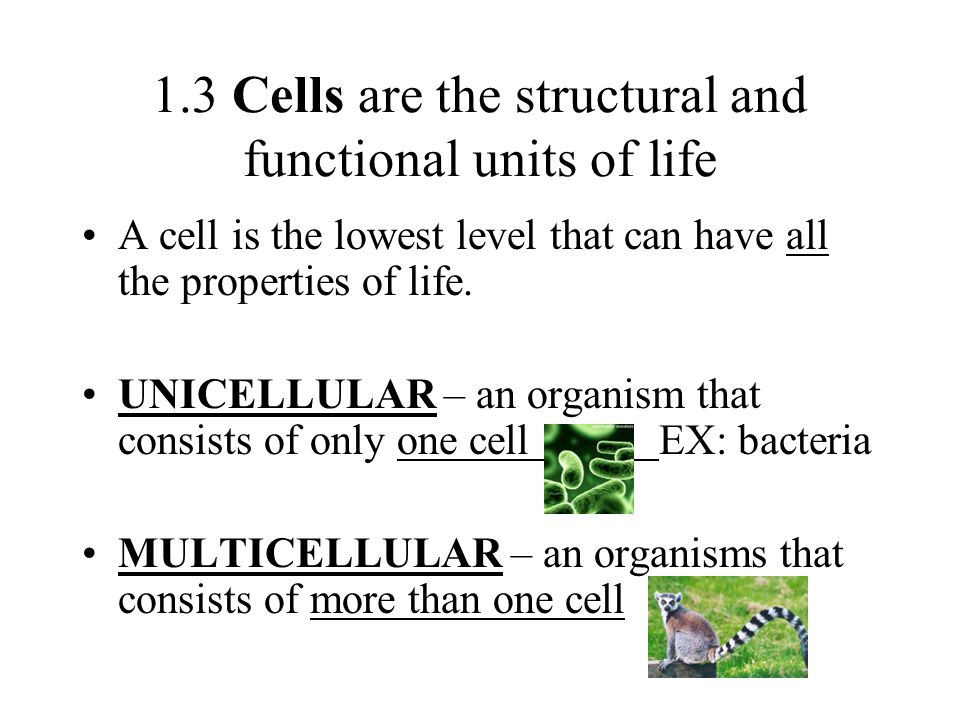 1.3 Cells are the structural and functional units of life