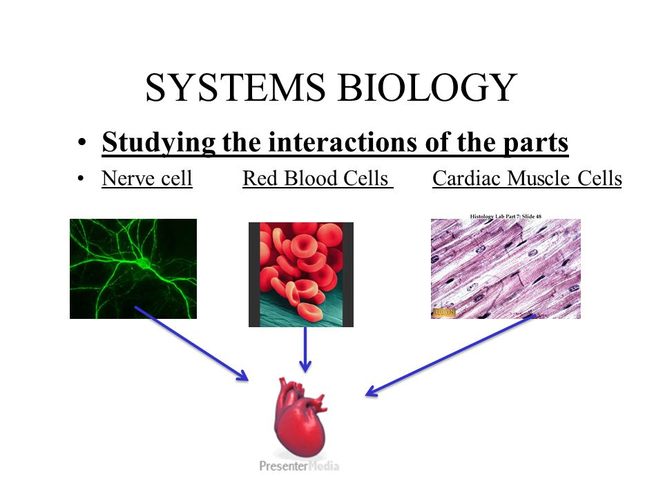 SYSTEMS BIOLOGY Studying the interactions of the parts