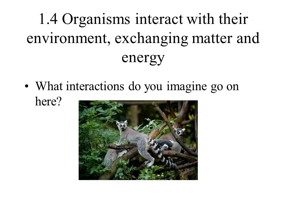 1.4 Organisms interact with their environment, exchanging matter and energy