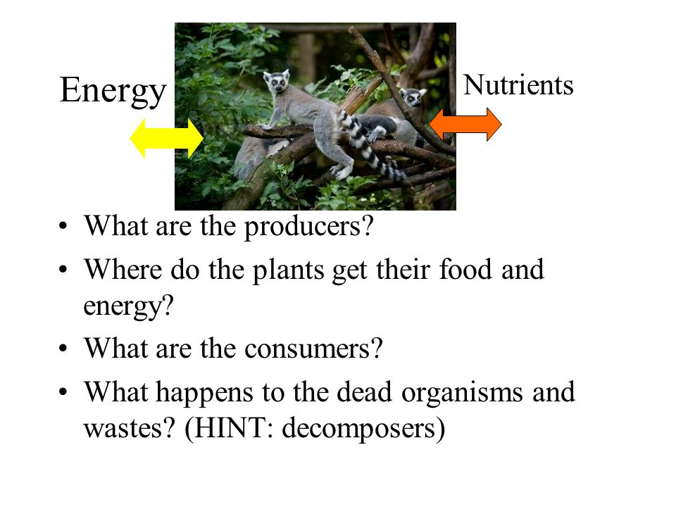 Energy Nutrients What are the producers