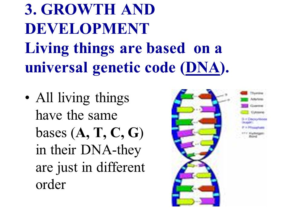3. GROWTH AND DEVELOPMENT Living things are based on a universal genetic code (DNA).