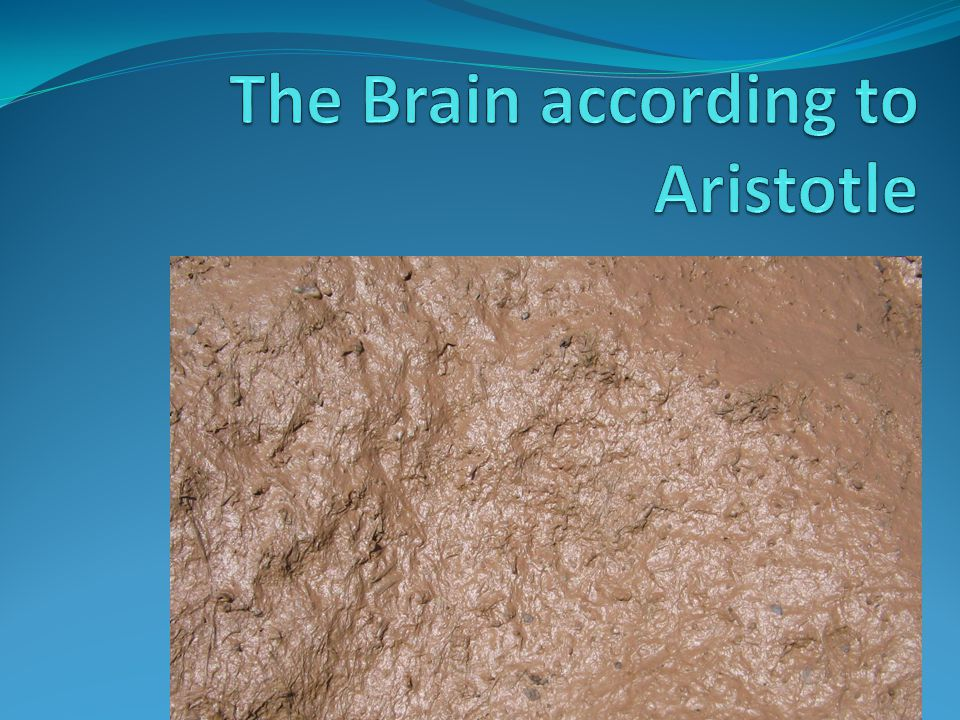The Brain according to Aristotle