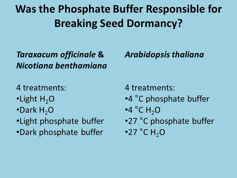 Was the Phosphate Buffer Responsible for Breaking Seed Dormancy